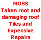 MOSS  Taken root and  damaging roof  Tiles and  Expensive  Repairs