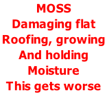 MOSS  Damaging flat  Roofing, growing  And holding  Moisture  This gets worse